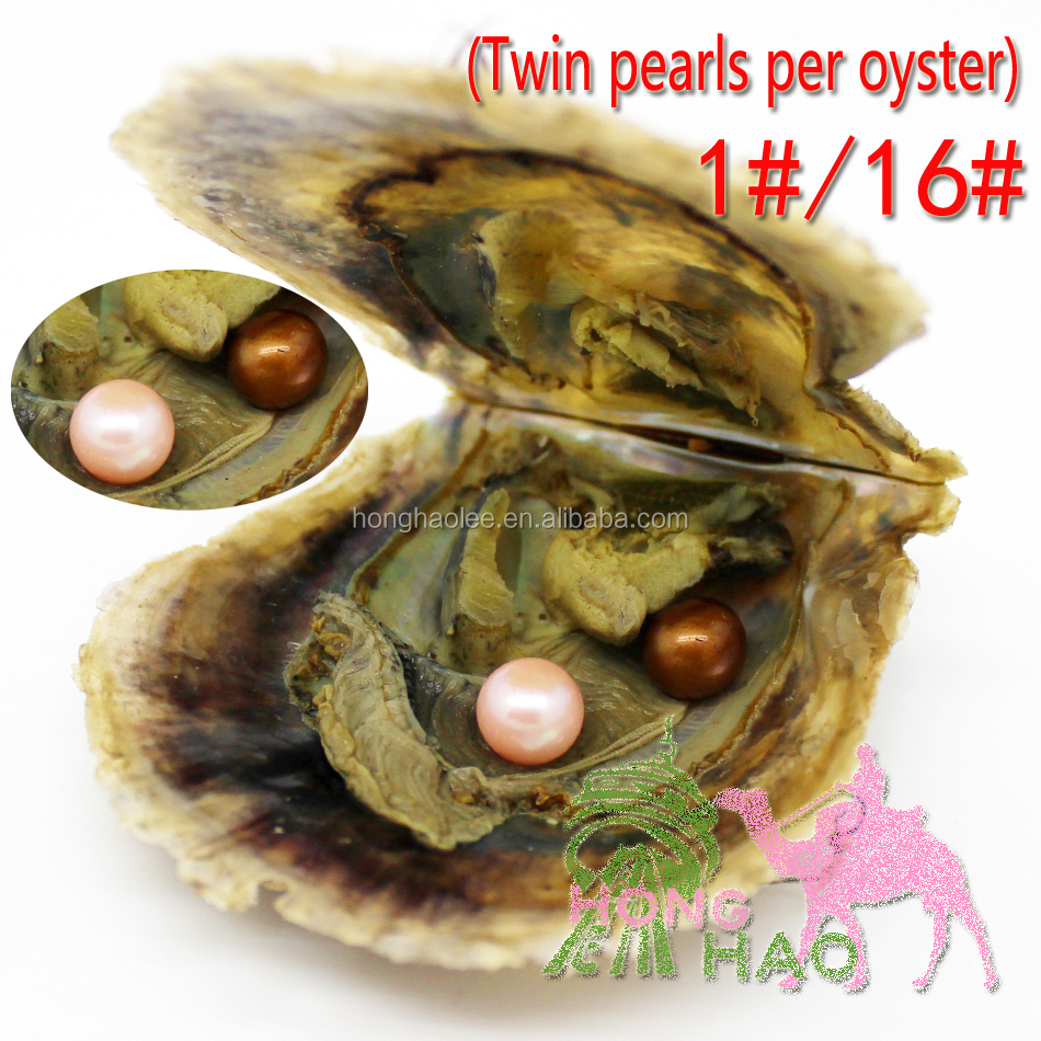 Mix 1 # and 16 # colors AAAA round akoya single and twins pearl oysters, 6-7 mm, an oyster individually packed in a vacuum bag