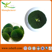 Factory supply Organic chlorella powder Chlorella vulgaris chlorella algae powder