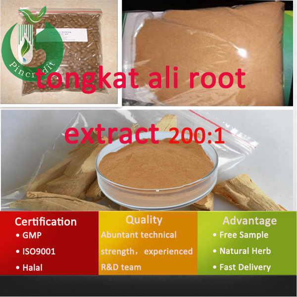 Herb Medicine For Man Tongkat Ali Root Extract 200:1
