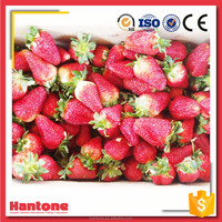 Whole IQF Frozen Strawberry