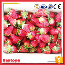 Wholesale Price Whole IQF Frozen Strawberry AM13