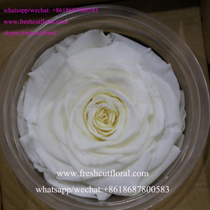 Top Sell The Preserved Roses With Stems And Cut Flower With Longevity From Kunming,Yunnan
