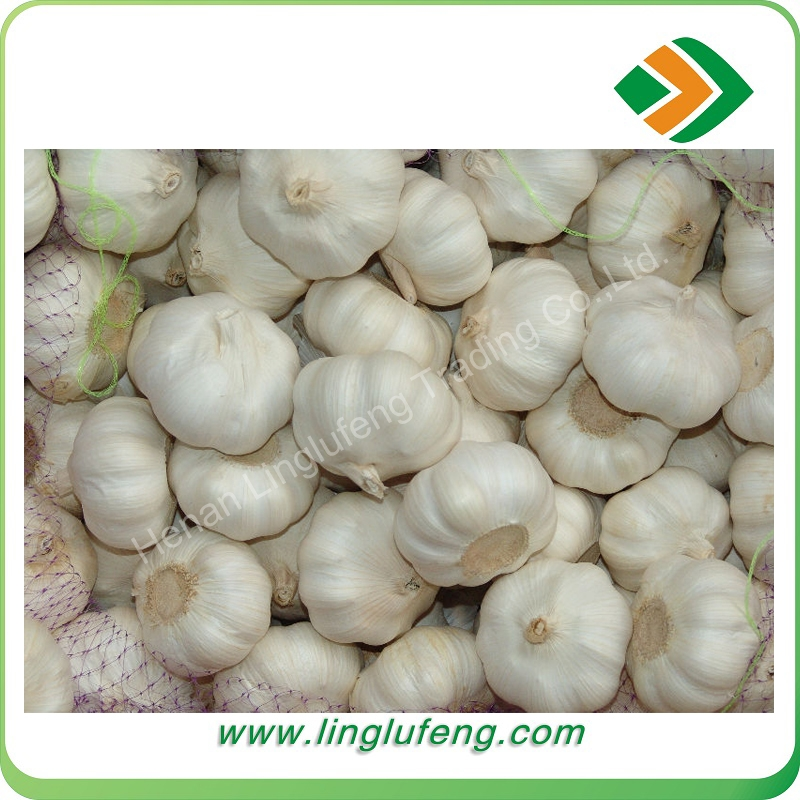 fresh white natural garlic for any market ,crisp garlic with good price