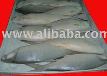 Frozen Fish- Milk Fish