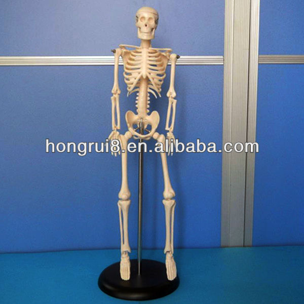 ISO Mini Skeleton, Anatomical Skeleton Model, Flexible Skeleton