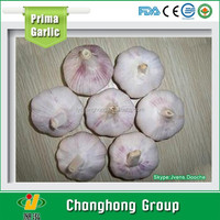 Normal White Garlic 5.0cm packed in 10kg/carton