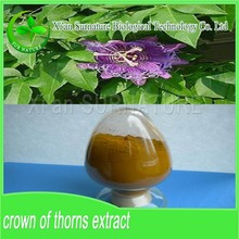 extract of crown of thorns/crown of thorns extract/holy thorn extract