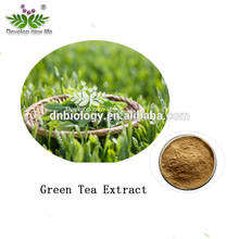 High quality matcha green tea extract , Natural green tea extract ISO 22000 certificated with polyphenol