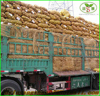 Fresh Potato Wholesale Price - The Best Seller in China