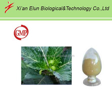 Damiana herbal extract 4:1,10:1 ratio from Natural plant in China