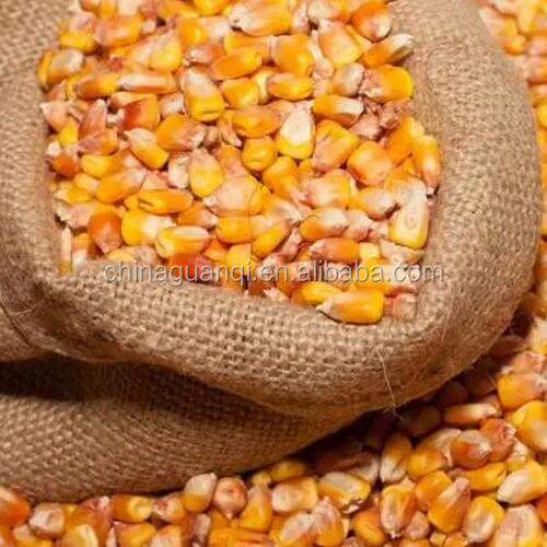 Bulk best yellow corn price