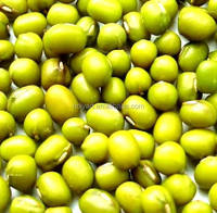 Hot sale price for green mung beans