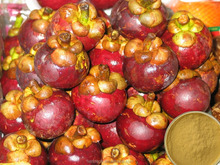 Best quality with Competitive price Mangosteen extract/mangosteen capsules/Garcinia mangostana L.