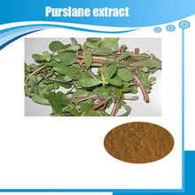 Professional Factory Supply Purslane Extract/Portulaca Oleracea Extract
