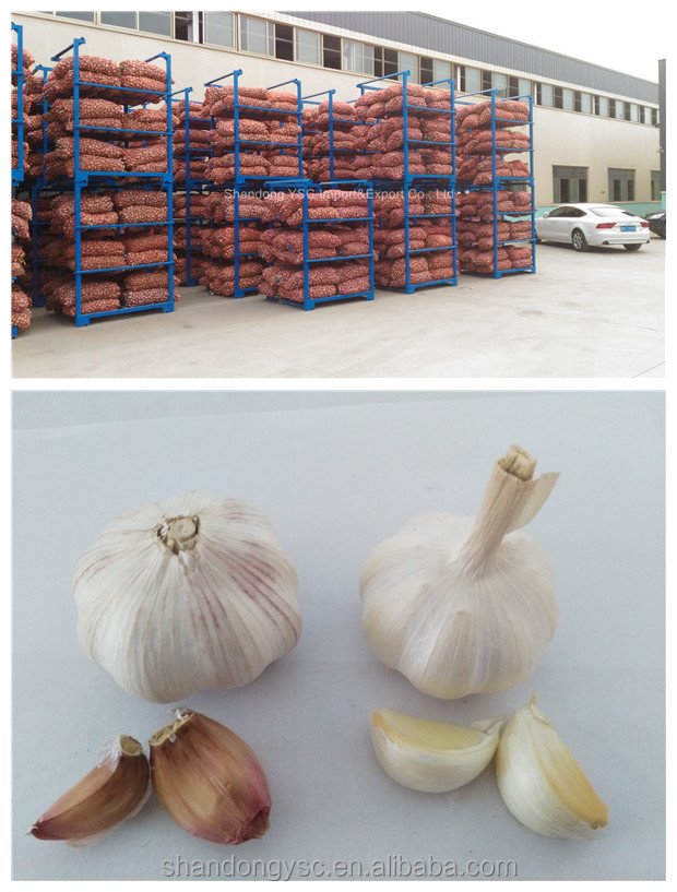 Chinese fresh elephant garlic price for garlic importer