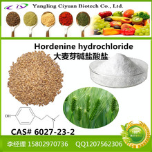 Factory Supply Hordenine Barley Malt Extract Powder 98%