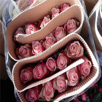Wholesale Fresh Roses Kenya Miss Rose Flower With Competitive Price