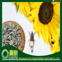 Storage Of Agricultural Product Chinese Sunflower seed