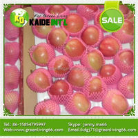 Red Mature Gala Apple