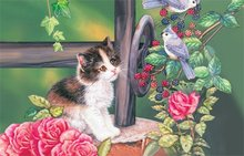 Beautiful cat 3d pictures natural animation