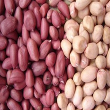 Good quality and price raw red skin peanuts