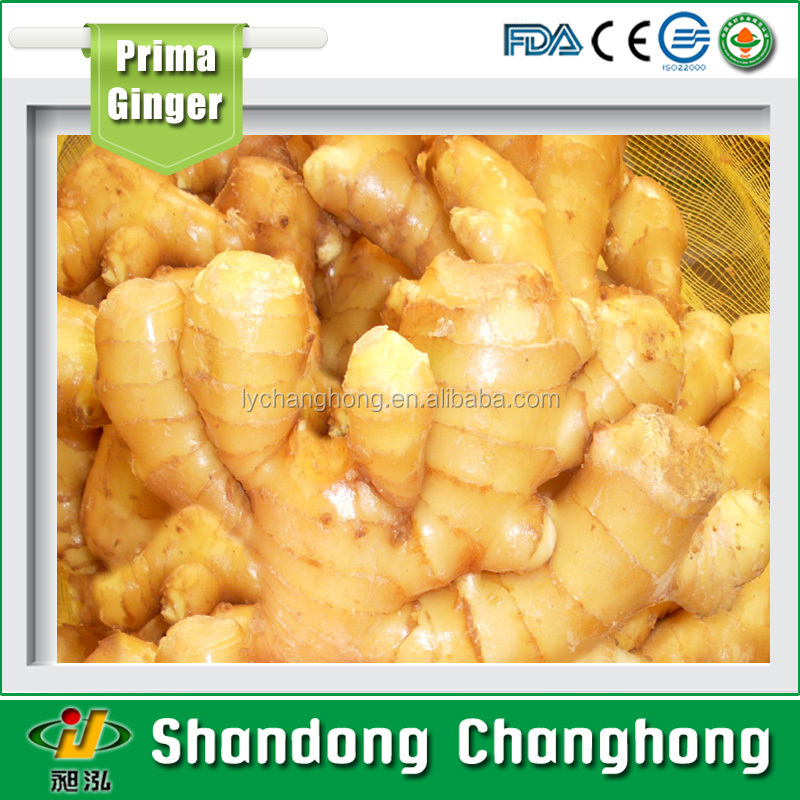 [HOT] Fresh ginger/market price for fresh ginger/bulk fresh ginger