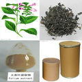 2013Best Price And Pure Indigowoad Leaf Extract