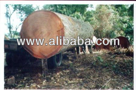 Tali,Zingana,Afromasia,Wenge,Mahogani, Bubinga And Other African Timber Logs