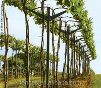 Orchard Plantations Vine Plants Grape Trellis Systems