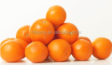 Orange Exporter valencia orange fruits fresh citrus