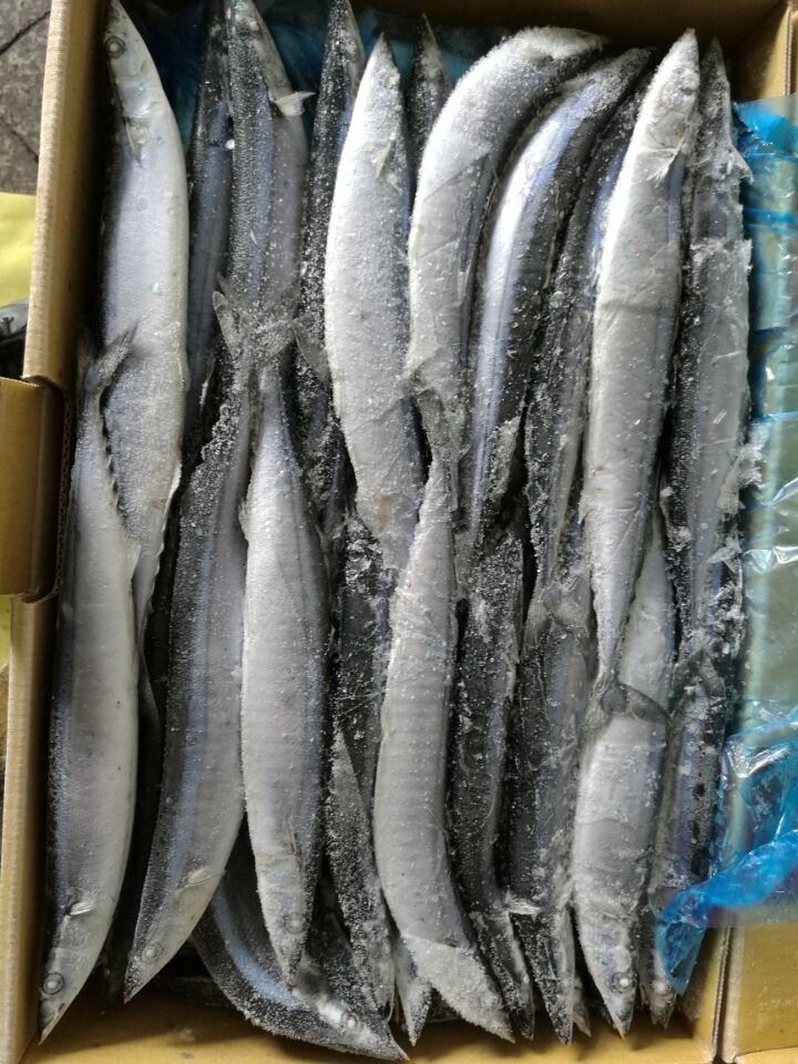 Good Price hot sale Top grade IQF Sea frozen Frozen Pacific Saury(cololabis Saira) Fish#1#2#3