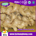 2014 new crop china fresh ginger/ air dried ginger/dried ginger