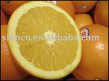factory fresh Navel Orange