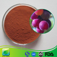 Antioxidant 95% OPC Proanthocyanidins Grape Seed Extract Powder