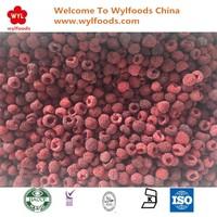 Wholesale Bulk IQF Frozen Fresh Organic Raspberries
