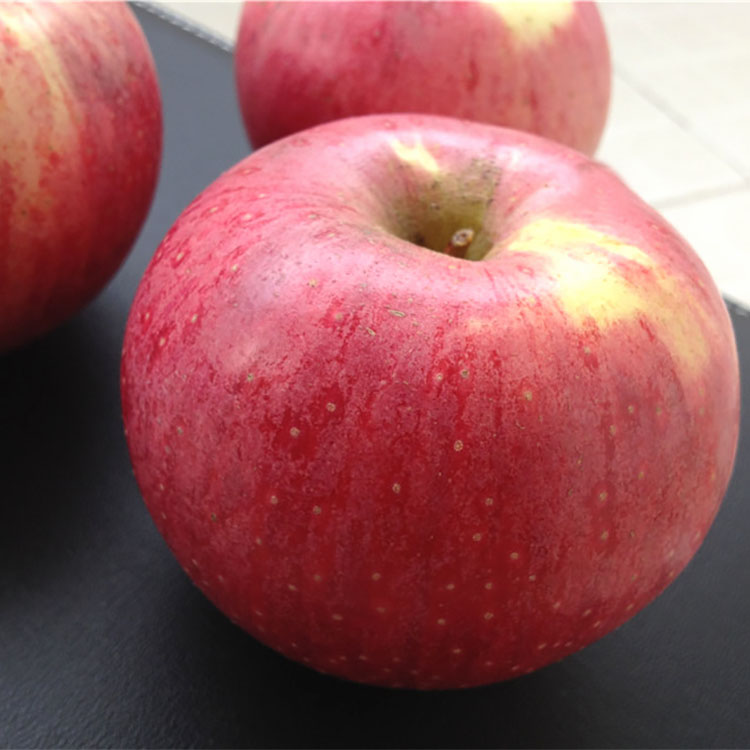 Low Price New Harvest Fresh Apple Fruit For Sale