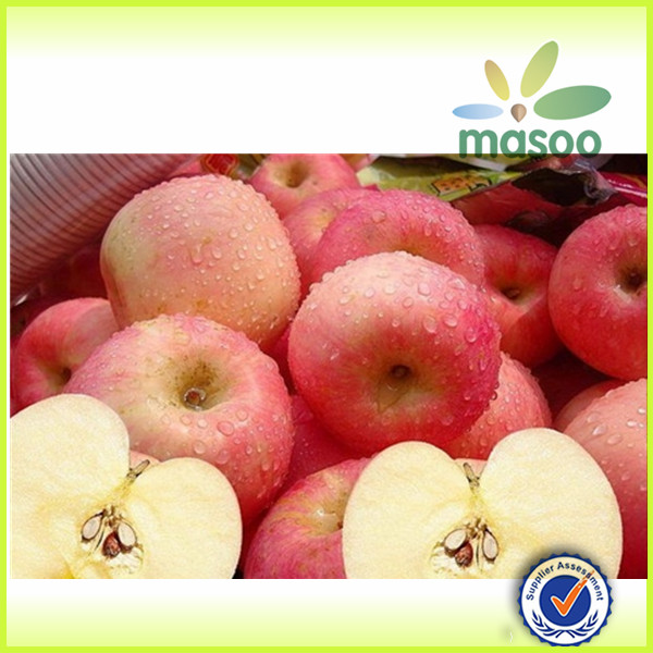 royal gala apple/apple/fresh apple with high quality