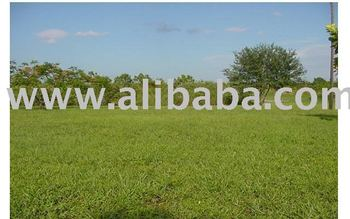 1000 ACRES OF LAND FOR SALE