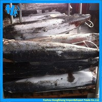 Frozen blue marlin fish factory