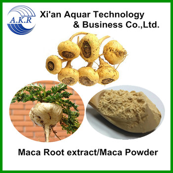 Herbal medicine for man recovery energy| Maca Extract|Maca root powder with 10:1 from Yunnan