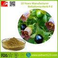 Atropa Belladonna extract, Hyoscyamine 0.75%,1.5%,1.8%, and high purity 90% 95% 98%, Professional supplier