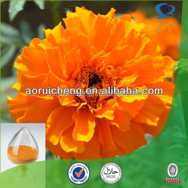 Healthy Herb Marigold Extract for Chickens