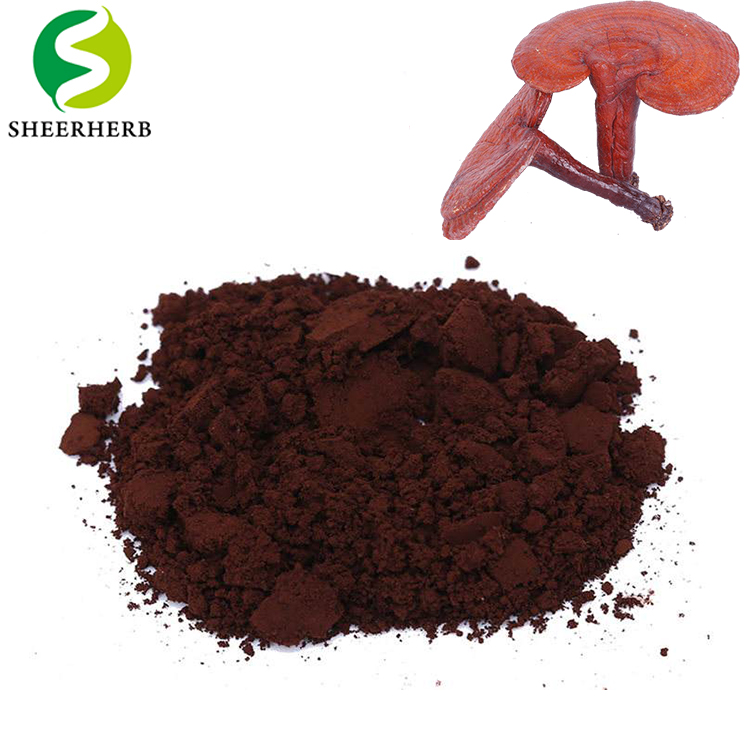The best price herb extract lucid ganoderma lucidum spore powder use in digestive biscuit