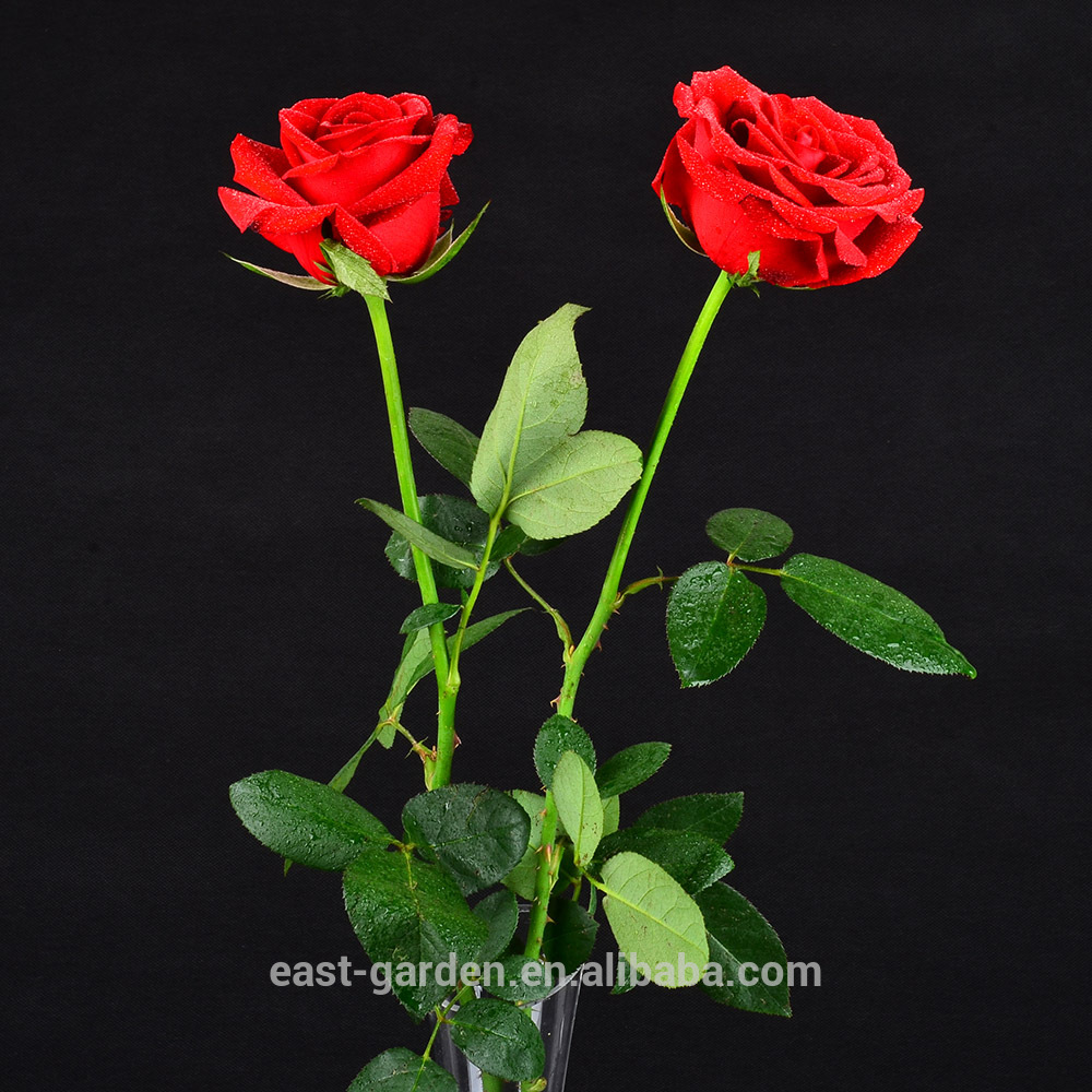 Fashion artificial rose flower very hot sale products
