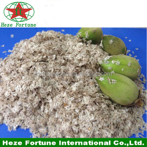 Fast growing rate Paulownia Shan Tong seeds for plantation