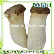 Professional supplier raw king oyster mushroom production