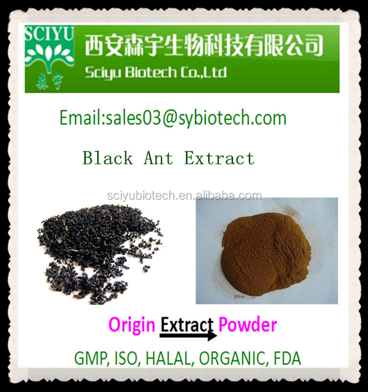 black ants powder 10:1 & black ants & black ants extract Black Ant Powder