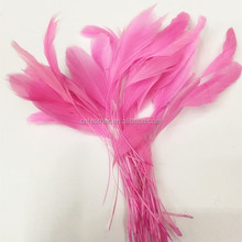 Stripped Rooster Coque Tail Feathers Rooster Feather for cheap sale