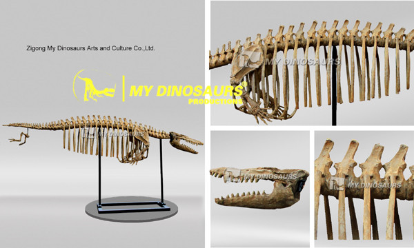 MY Dino SF-15 Large Size Animal Whale Skeleton Model