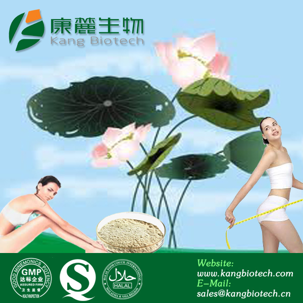 Weight Loss Herb Lotus Leaf Extract Powder